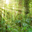 Sunlight in dorrigo world heritage rainforest — Stock Photo