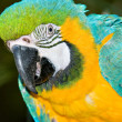 Macaw — Stock Photo #1848950