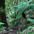 Stock Photo: Ferns