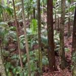 Rain forest trees — Stock Photo