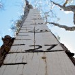 Height marker — Photo #1865465