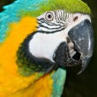 Macaw — Stock Photo #1866062