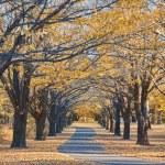 Autumn path — Stock Photo #1911372