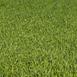 Lush green grass — Stock Photo #1911387