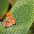 Stock Photo: Butterfly on leaf