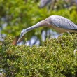 Heron on a hedge — 图库照片