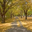 Stock Photo: Autumn path
