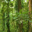 Stock Photo: Beautiful world heritage rainforest