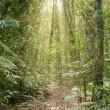 Stock Photo: Rays of light in the rainforest