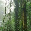 Rain forest — Stock Photo #2063801