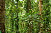Beautiful world heritage rainforest — Stock Photo