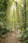 Rays of light in the rainforest — Stock Photo