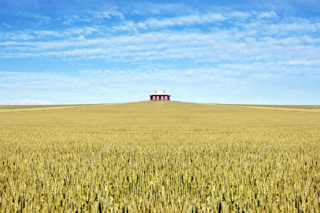 Old house in the middle of a field of wheat — Stock Photo #2425729