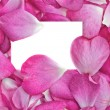 Royalty-Free Stock Vector Image: Rose petals with card