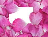 лепестки роз с картой — Cтоковый вектор