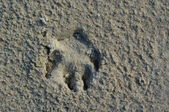Animal`s footstamp. — Stockfoto