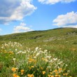 meadow landscape — Stock Photo