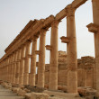 Stock Photo: Palmyra