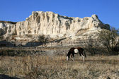 Rock landscape with horse — Stock Photo