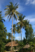 Bungalows, Kamala Beach, Phuket, Tailand — Stock fotografie