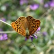Butterfly — Stock Photo #1088897