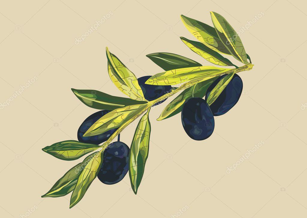 Vector olive branch � Stock Vector � missbobbit #1173789