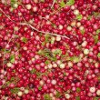 Stock Photo: Cranberry