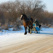 Stock Photo: Horse sleigh
