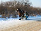 Horse sleigh — Stock Photo