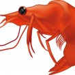 Shrimp - Stock Vector