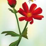fiore di campo rosso — Vettoriale Stock