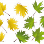 Maple leaves — Stock Vector