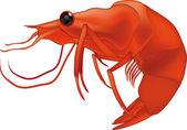 Shrimp — Vecteur