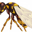 Yellow wasp - Imagens vectoriais em stock