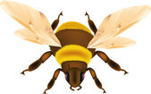 Insect bumble bee — Stock Vector