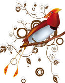 Paradise bird — Stock Vector