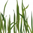 Grass — Stock Vector