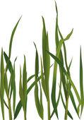 Grass — Stock Vector