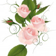 Bouquet of a rose - Stock Vector