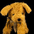 Soft toy dog — Stock Photo