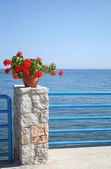 Flowers and the seafront — Stock Photo