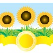Stock Vector: Beautiful vector sunflower background