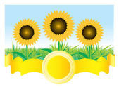 Beautiful vector sunflower background — Stock Vector