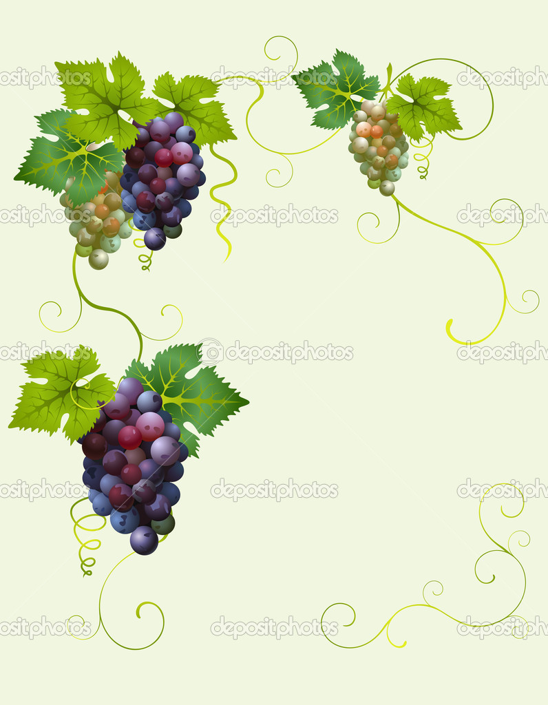 Vector grape frame — Stock Vector #1085500