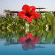 Red flower on water, beach resort — Stock Photo