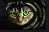 Black cat with green eyes — Stock Photo