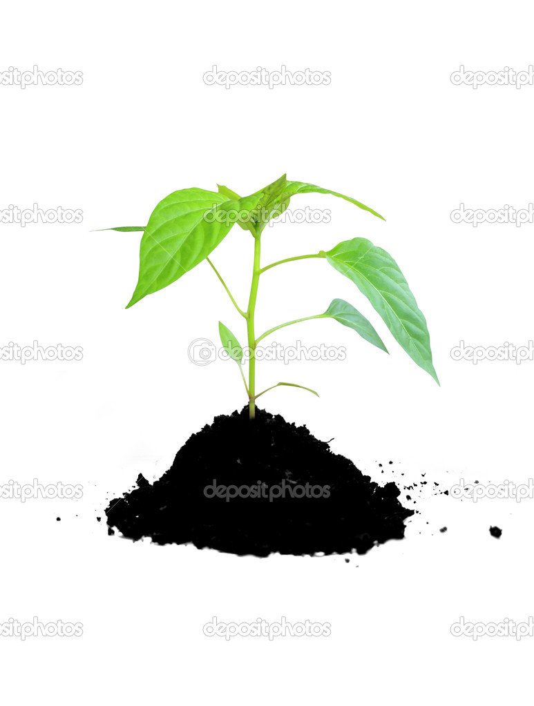 Growing plant green and soil — Stock Photo #2332660