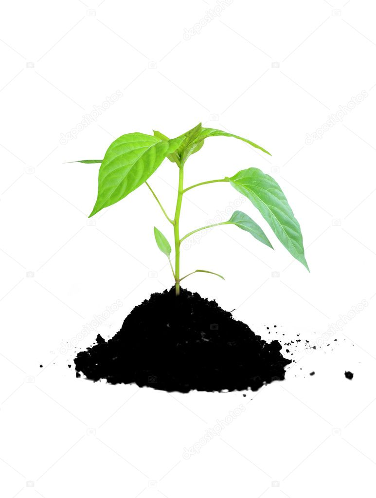Growing plant green and soil stock photo kudryashka for Soil and green