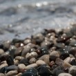 Wet pebbles on sea coast — Stock Photo #2582063