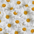 Stock Photo: Summer background, daisies